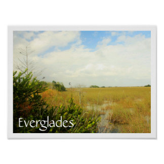 Marsh in Everglades National Park, Florida Poster