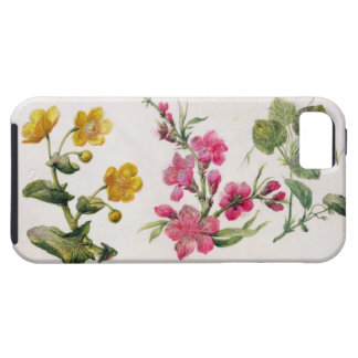 Marsh Marigold, Japonica, Violet (w/c on paper) iPhone 5 Cover
