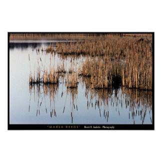 Marsh Reeds Posters