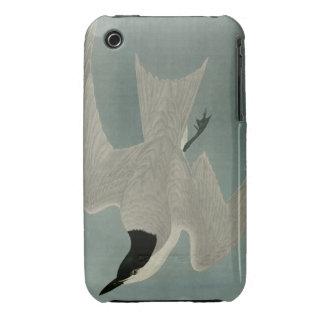 Marsh Tern Case-Mate iPhone 3 Case