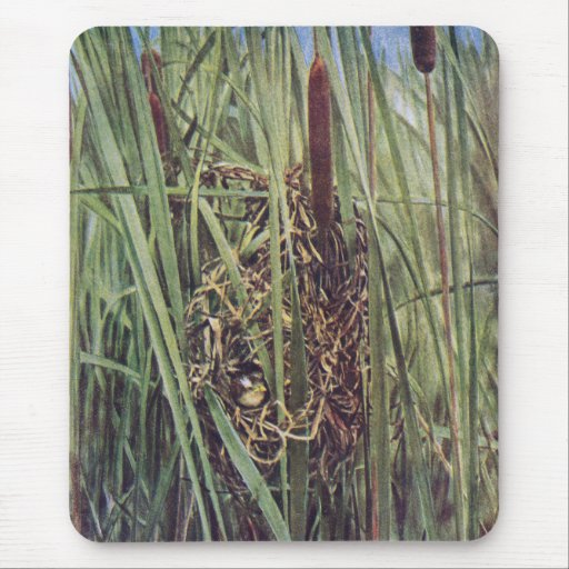 Marsh Wren Nest in Cattails Mouse Pad