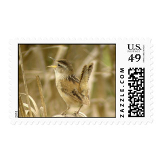 Marsh Wren Postage