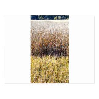marshgrassescloseup.jpg postales