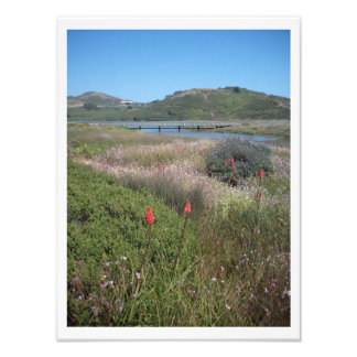 """Marshland Meadows"" Marin Headlands Photo Print"