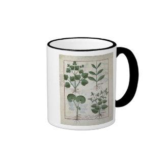 Marshmallow & Hastula Regia Asarabacca & Ringer Coffee Mug