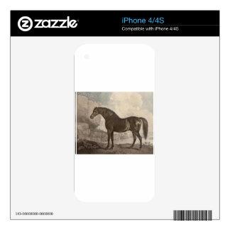 Marske Horse by George Stubbs iPhone 4 Decals