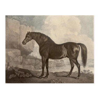 Marske Horse by George Stubbs Postcard