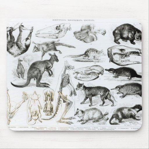 Marsupialia, Monetremata, Edentata Mouse Pads