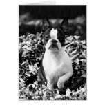 Martha in leaves -black/white greeting cards