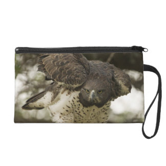 Martial Eagle adult in tree Wristlet Purse