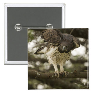 Martial Eagle adult in tree Buttons