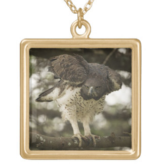 Martial Eagle adult in tree Gold Plated Necklace