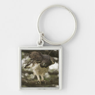 Martial Eagle adult in tree Keychain