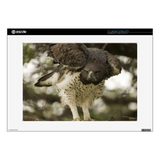 Martial Eagle adult in tree Laptop Decals