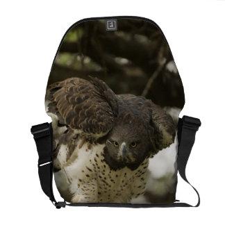 Martial Eagle adult in tree Messenger Bag