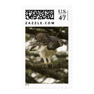 Martial Eagle adult in tree Postage