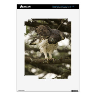 Martial Eagle adult in tree Skins For iPad 3