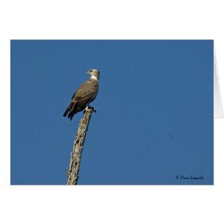 MARTIAL EAGLE GREETING CARD