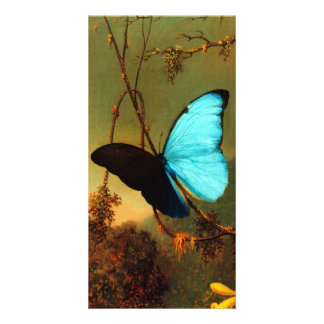Martin Johnson Heade Blue Morpho Butterfly Photo Card