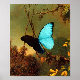 Martin Johnson Heade Blue Morpho Butterfly Poster