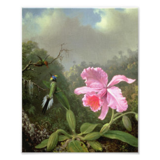 Martin Johnson Heade Orchid And Hummingbirds Photo Print