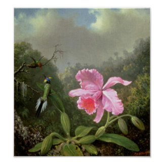 Martin Johnson Heade Orchid And Hummingbirds Poster