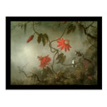 Martin Johnson Heade Passion Flowers and Hummingbi Postcard
