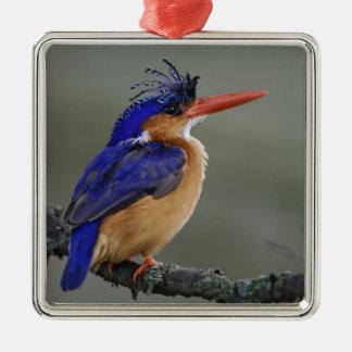 Martín pescador de la malaquita, cristata del Alce Adorno De Navidad