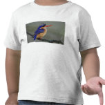 Martín pescador de la malaquita, cristata del camisetas