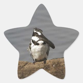 Martín pescador de varios colores pegatina en forma de estrella