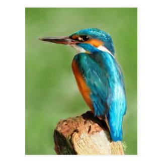 Martín pescador tarjetas postales
