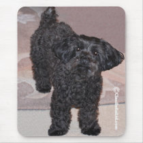 Martini the Yorkie-Poo Mouse Pad