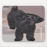 Martini the Yorkie-Poo Mousepads