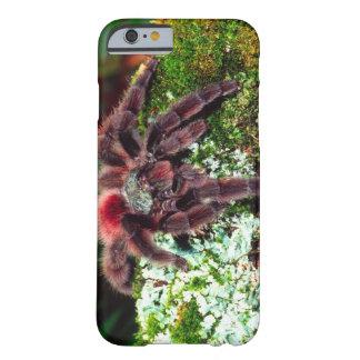 Martinique Tree Spider, Avicularia versicolor, Barely There iPhone 6 Case