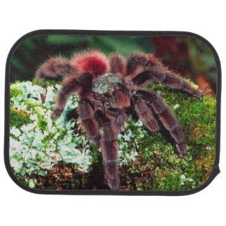 Martinique Tree Spider, Avicularia versicolor, Car Floor Mat