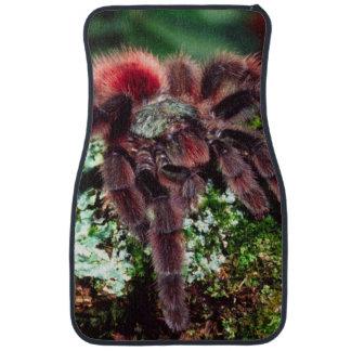 Martinique Tree Spider, Avicularia versicolor, Car Mat