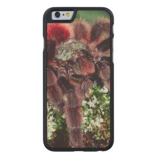 Martinique Tree Spider, Avicularia versicolor, Carved® Maple iPhone 6 Case