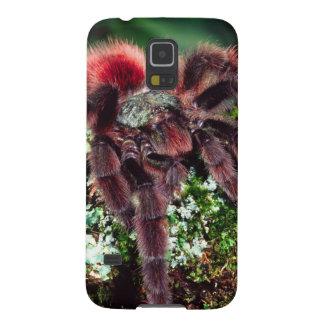 Martinique Tree Spider, Avicularia versicolor, Galaxy S5 Cover