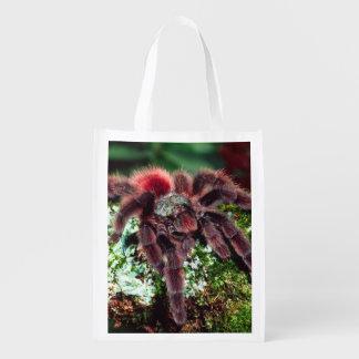 Martinique Tree Spider, Avicularia versicolor, Grocery Bags