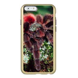 Martinique Tree Spider, Avicularia versicolor, Incipio Feather® Shine iPhone 6 Case
