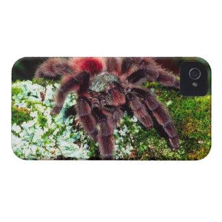 Martinique Tree Spider, Avicularia versicolor, iPhone 4 Case-Mate Cases