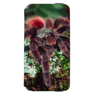 Martinique Tree Spider, Avicularia versicolor, iPhone 6/6s Wallet Case
