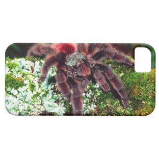 Martinique Tree Spider, Avicularia versicolor, iPhone SE/5/5s Case