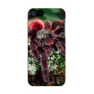 Martinique Tree Spider, Avicularia versicolor, Metallic iPhone SE/5/5s Case