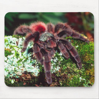 Martinique Tree Spider, Avicularia versicolor, Mouse Pad