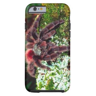 Martinique Tree Spider, Avicularia versicolor, Tough iPhone 6 Case
