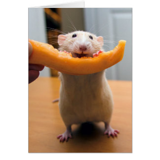 Marty Mouse Loves Cantaloops! Card