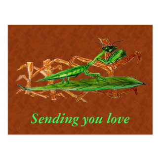 Marty The Prying Mantis, Postcard