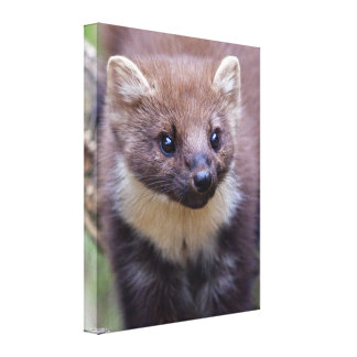 Marty Wrapped Canvas Canvas Prints