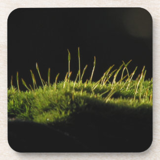 Marvelous Moss Drink Coaster